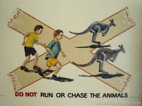 Do not run or chase the animals