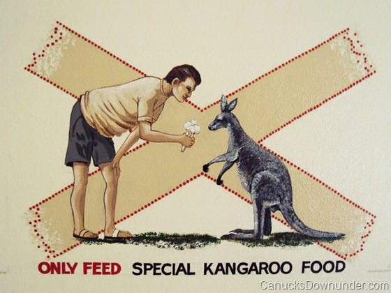 Only feed special kangaroo food