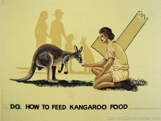 How to feed kangaroo food